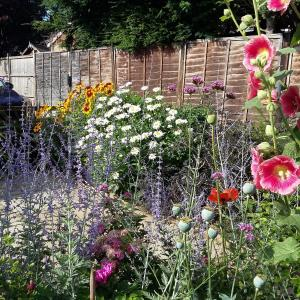Mixed border June 2017